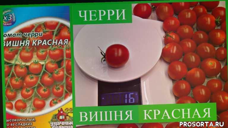 черри, умелая хозяйка, урожай, огород, дача, рассада, семена, помидоры