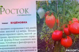 продажа семян донецк, анатолий тутов, теплицы донбасса, лидиевка, семена удачи, китано, урожайные томаты