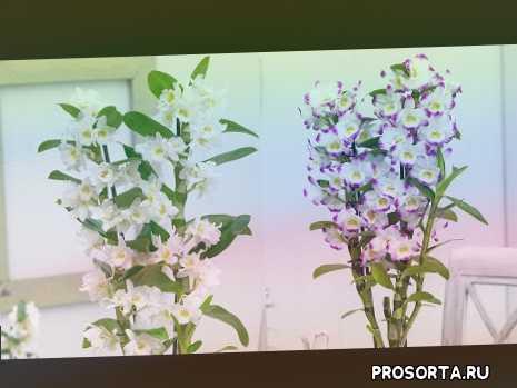 #правила_выращивания_#орхидеи_дендробиум, #dendrobium_orchids, #орхидеи_дендробиум, #oldenburgru
