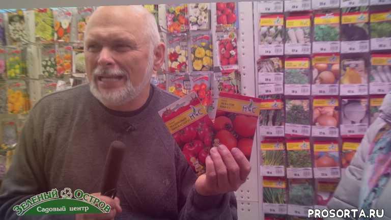 томаты, сидельников, огород, саженцы, посадочный, зеленый остров, садовый центр