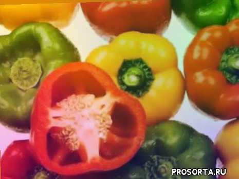 болгарский перец и его семена на нашем столе