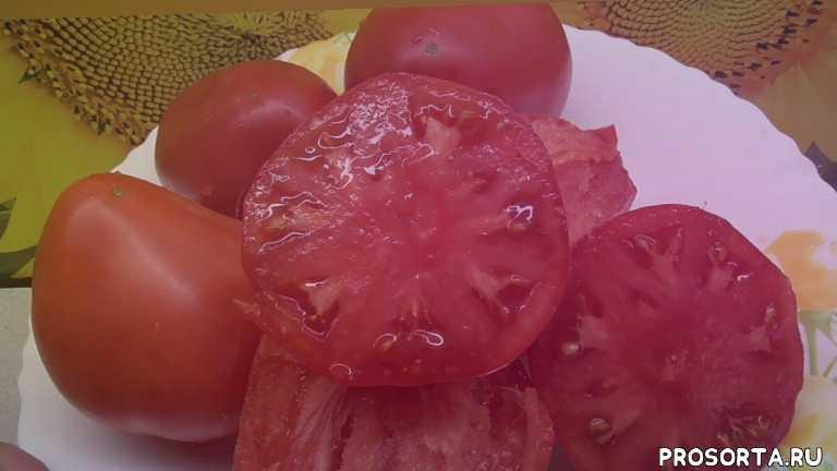 томат батяня, дегустация томатов, обзор томатов, томаты, огородная азбука, ольга чернова