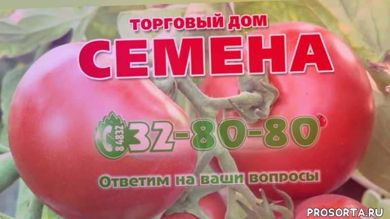 Томат Бабушкино лукошко