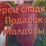 Перец сладкий Подарок Молдовы (podarok moldovy) ? обзор: как сажать, семена перца Подарок Молдовы