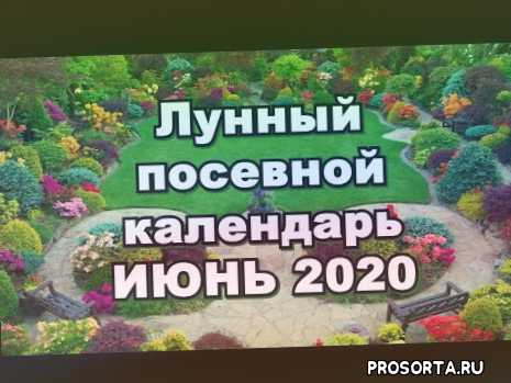 календарь огородника, календарь садовода, июнь 2020, когда сеять семена в июне 2020, лунный календарь на июнь 2020, лунный посевной календарь, посевной календарь на июнь 2020, посев семян
