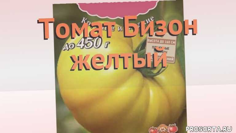 семена, семена томата бизон желтый, томат обыкновенный бизон желтый обзор как сажать, томат обыкновенный бизон желтый обзор, томат бизон желтый обзор как сажать, травы, обыкновенный томат бизон желтый обзор как сажать, обыкновенный томат бизон желтый обзор