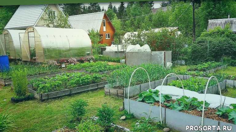 надежда ненахова, в огороде. про, vogorode.pro, в огороде про, огород про, вогороде про, выращивание перцев, выращивание баклажанов