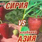 КЛУБНИКА СИРИЯ vs КЛУБНИКА АЗИЯ (26-05-2018)