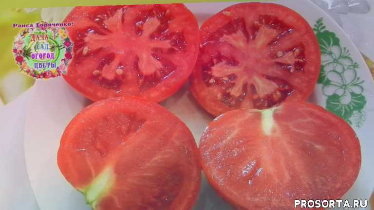 салатный томат, долго хранится, белфорт, отзывы по томатам, лучшие сорта томатов, какие томаты посадить, гибриды томатов, описание сорта томата