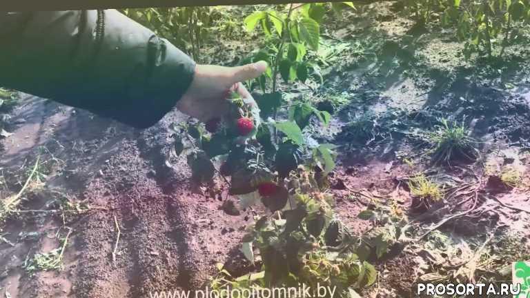 растения, сельское хозяйство, посадка растений, сад, фермерство, питомник растений саженцы купить саженцы садоводство, описание, сорта
