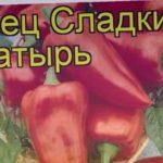Перец сладкий Богатырь. Краткий обзор, описание характеристик, где купить саженцы, семена Bogatyr