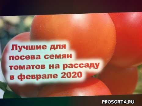 когда сеять томаты, когда сажать помидоры, когда сеять семена томатов на рассаду, сроки посадки томатов на рассаду, посев семян томатов на рассаду, посадка, семена, посадка семян томатов на рассаду