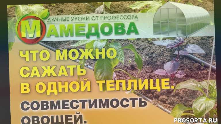совместимость овощей в теплице, совместимость овощей при посадке, совместимость овощей на грядке, теплица что выгодно выращивать, теплица что выращивать, теплица что посадить, агрофирма аэлита, агрофирма аэлита каталог
