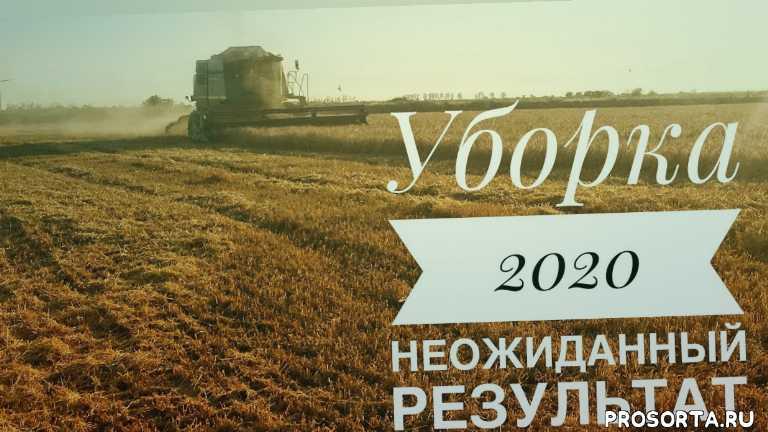 жнива 2020, жнива, комбайн jondere, комбайн джондир, озимый ячмень луран, луран, озимые зерновые, зерновые 2020