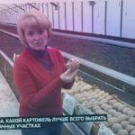 Какие сорта белорусского картофеля самые вкусные и урожайные