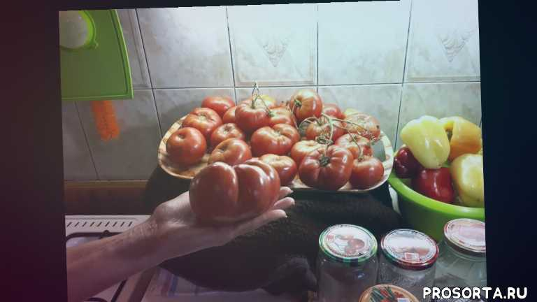томат микадо в подмосковье, уход за томатами микадо, вес томатов микадо, как вырастить томаты микадо, микадо срок созревания, томат микадо розовый, томат микадо, помидор микадо