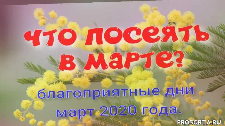лук, капуста, перцы, помидоры, посев цветов, что посеять в марте, #март 2020, когда сеять