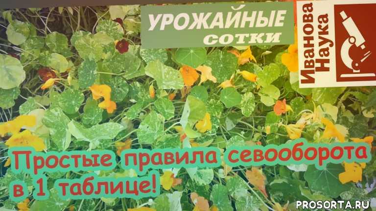 что посеять, как правильно чередовать, севооборот, vogorode.pro, огород про, вогороде про, в огороде про, как ориентировать теплицу по сторонам света