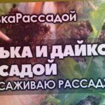 ?#1 Высаживаю рассаду редьки. Выращивание дайкона и редьки рассадой.