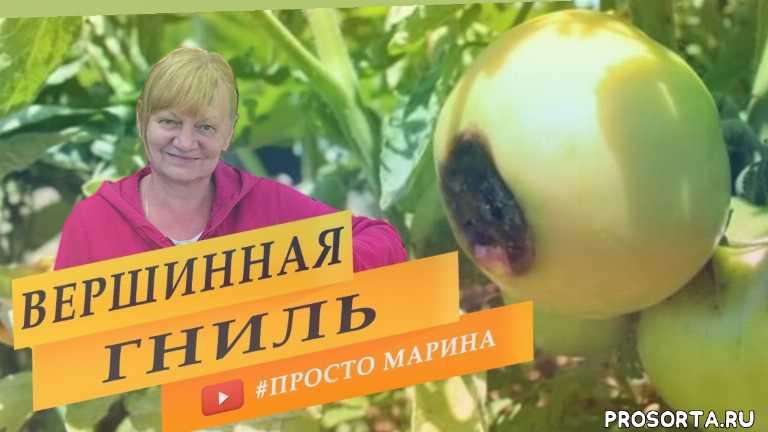 просто марина, плоды томатов, плоды, удобрение, подкормка, полив, зола, рассада помидор