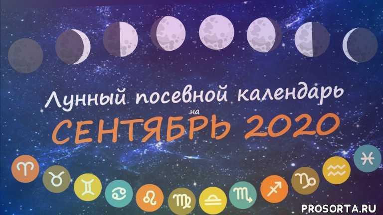 календарь садовода, сентябрь 2020, посевной календарь, календарь огородника, лунный календарь садовода