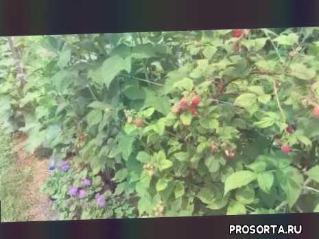 выращивание, уход, огород, дача, сад, появились, почему, болезни