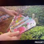 АСТРЫ из семян ПРОСТАЯ ПИКИРОВКА. как вырастить астру из семян видео. астра пикировка