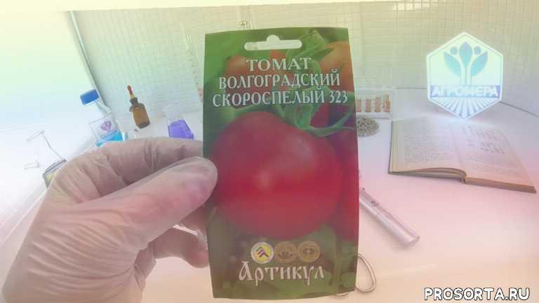 Томат Волгоградский скороспелый 323. Артикул