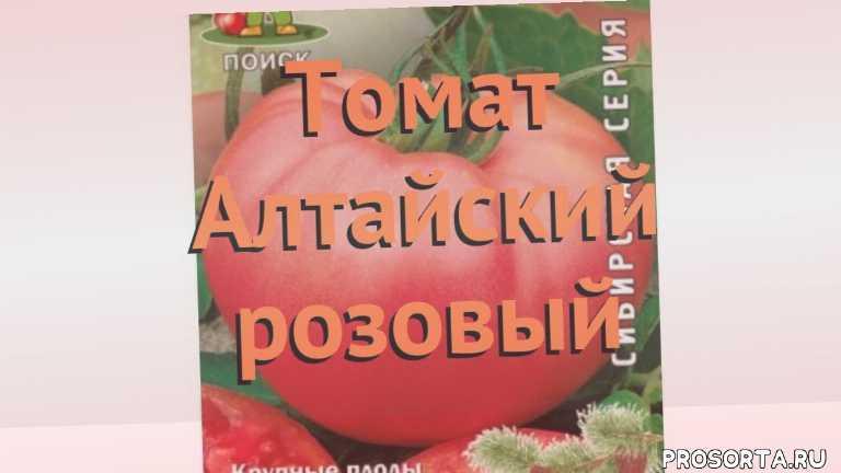 семена, семена томата, томат обыкновенный алтайский розовый обзор, томат алтайский розовый обзор как сажать, травы, обыкновенный томат алтайский розовый обзор как сажать, обыкновенный томат алтайский розовый обзор, обыкновенный томат