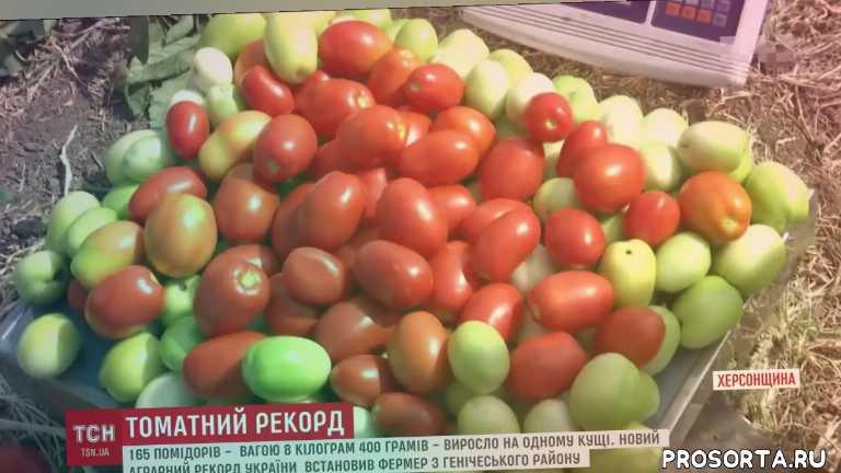 семена clause, семена владам-юг, как выращивать овощи, семена овощей