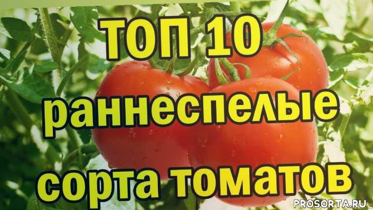 топ 10, топ, ранние томаты, семена помидор, семена томатов, какие сорта томатов, раннеспелые сорта, ранние помидоры