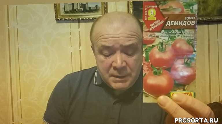 томаты подмосковья открытый грунт сорта гибриды