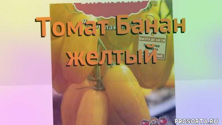 семена, семена томата банан желтый, томат обыкновенный банан желтый обзор как сажать, томат обыкновенный банан желтый обзор, томат банан желтый обзор как сажать, травы, обыкновенный томат банан желтый обзор как сажать, обыкновенный томат банан желтый обзор
