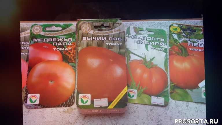 сад огород посев томатов
