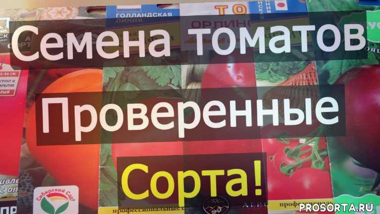 купить семена томатов, как выбрать семена, семена томатов для теплицы, семена томатов для открытого грунта, сорт томатов хурма, низкорослые сорта томатов, вкусные сорта помидор, проверенные сорта томатов