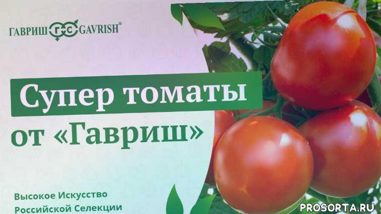 томаты для теплицы, помидоры для теплицы, семена помидоров, выращивание помидоров, рассада помидоров, посадка томатов, выбираем томаты, рассада томатов