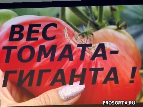 выращивание в теплице, выращивание, земля, овощи, лучшие сорта, супер, способ, урожай