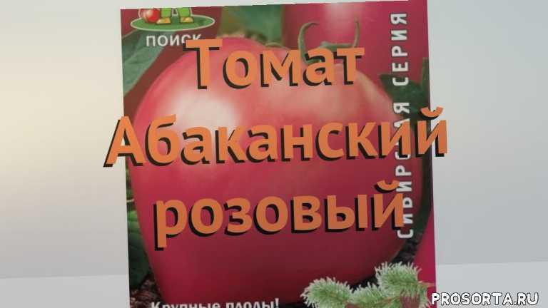 семена томата, томат обыкновенный абаканский розовый обзор, томат абаканский розовый обзор как сажать, травы, обыкновенный томат абаканский розовый обзор как сажать, обыкновенный томат абаканский розовый обзор, обыкновенный томат, обыкновенный томат абаканский розовый