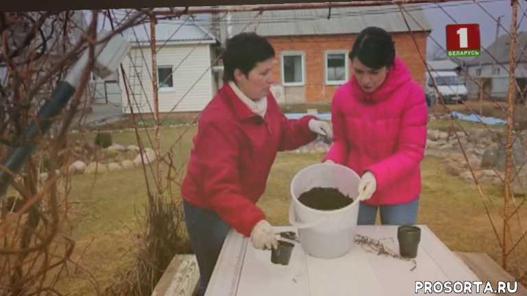 татьяна ларина, избавляемся от пней.ю выращиваем малину, пни, дача