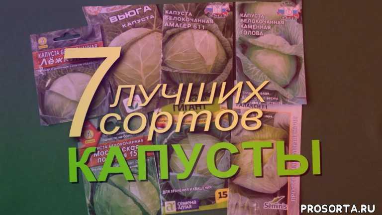 грунт, грядка, дача, сад огород, длительного хранения, лучшие сорта, выращивание белокочанной капусты, рассада