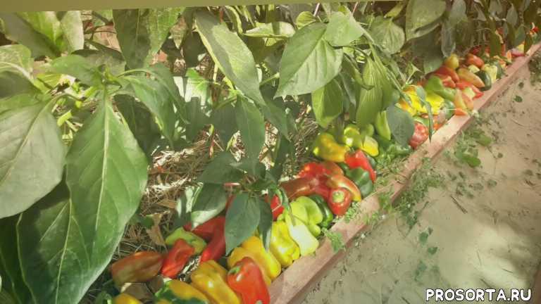 agrocult, агрокульт, лечо, сбор, огородники, огородничество, дом, хозяйство