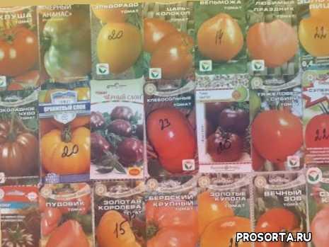 питомник ягодное подворье, помидоры, детерминантные сорта помидор, детерминантные сорта томатов, ягодное подворье томаты, посев в снег, урожайный огород, выращивание томатов