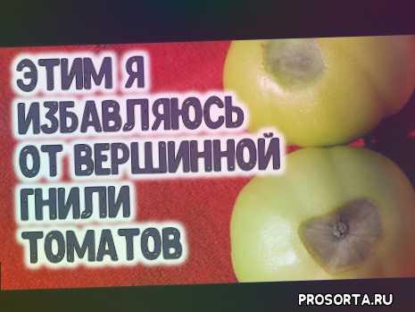 кальций, вершинная гниль, уход за томатами в теплице, как выращивать помидоры, полив, когда, чем, супер подкормка