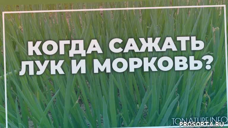 земля длялук, почва для лук, лук полив, лук вредители, лук болезни, лук удобрение, лук подкормка, лук пересадка
