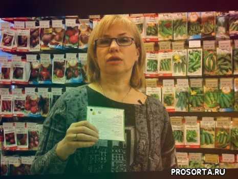 в открытом грунте, в теплице, выбрать сорт, огурчики, урожай, посев, продажа, купить семена