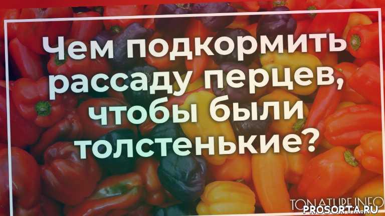 удобрение рассады перцев, удобрение перцев, подкормка рассады перца, подкормка перцев, высадка перца, перец уход, условия для перца, выращивание перца