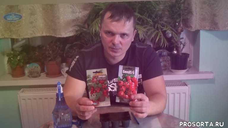балконные помидоры, балконные томаты, сорт томатов линда, выбор сорта томатов, как вырастить томаты на балконе, как вырастить помидоры в квартире, выращивание томатов на подоконнике, томаты