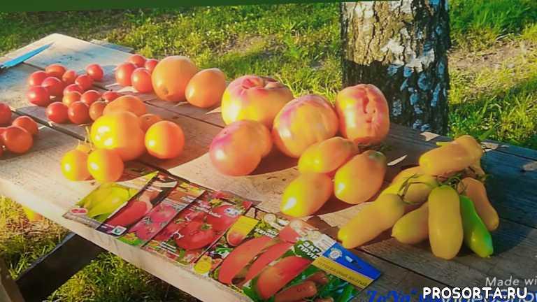 обзор урожайных помидор, самые лучшие сорта томатов и гибридов в одном видео, обзор супер томатов и отзыв, отзыв о сортах и гибридах томатов