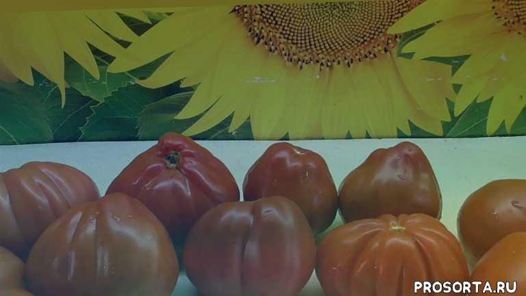 пузата хата, обзор томата, дегустация томатов, обзоры, томаты, огородная азбука, ольга чернова