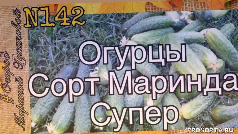 выращивание огурцов, gardenwithmarinagusakova, мульчирование, органическое земледелие, природное земледелие, фитоверм для огурцов, фитоверм от паутинного клеща, марина гусакова
